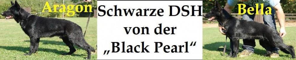 Deuscher Schäferhundzwinger von der Black Pearl